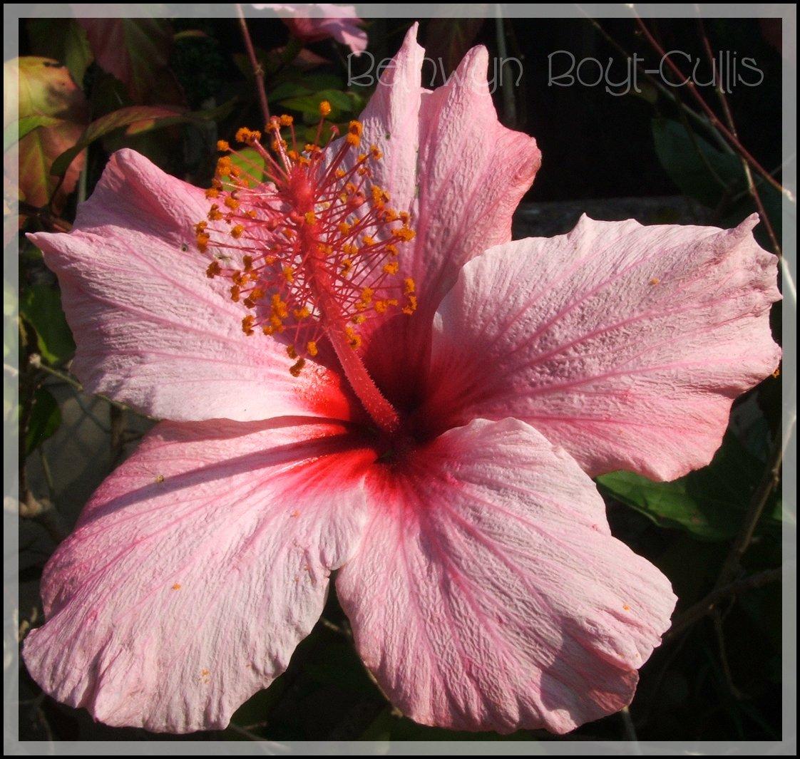 Bonjour avec des fleurs des les simplicite partag e - Fleurs des iles grasse ...
