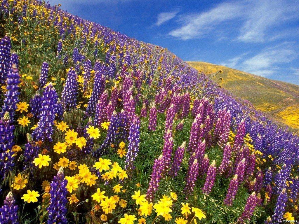 fond-ecran-nature-paysages-fleurs-champs-023-1024x768 dans Fleurs