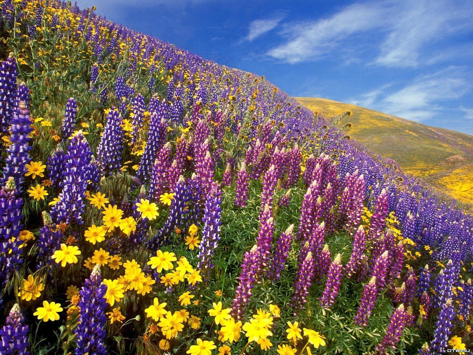 fond,ecran,nature,paysages,fleurs,champs,023,1024x768 dans «